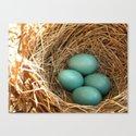 Four American Robin Eggs Canvas Print
