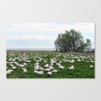 Les Grandes Oies Des Nei… Canvas Print