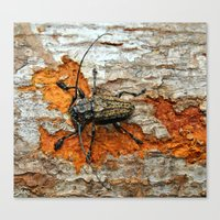 One Tough Bug Canvas Print