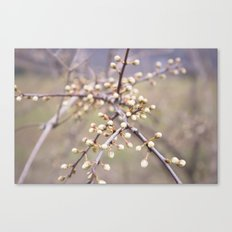 blooms Canvas Print