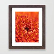 Orange Gerbera Framed Art Print