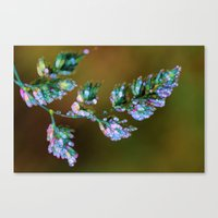 Tropical, feathers and dew Canvas Print