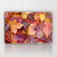 Autumn's Carpet Laptop & iPad Skin