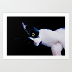 Black White Cat Art Print