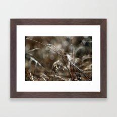 Pure Morning IV Framed Art Print