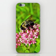 Bombus Auricomus  iPhone & iPod Skin