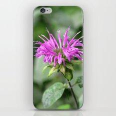 Monarda - Bee Balm iPhone & iPod Skin