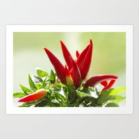 Chili Peppers On The Vin… Art Print