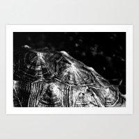 Black Shells Art Print