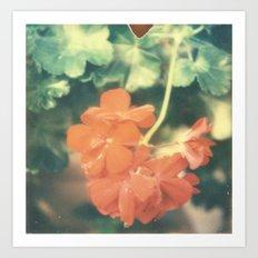 Red Begonia Art Print