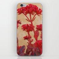 Rustic Flowers iPhone & iPod Skin