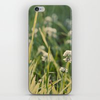 Dusk in the Field iPhone & iPod Skin