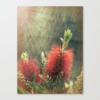 Bottle Brush Plant Canvas Print