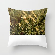 Sunward Throw Pillow