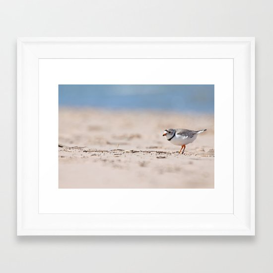 Great Lakes Piping Plover Framed Art Print