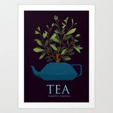 Tea - Camellia Sinensis Art Print
