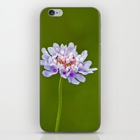 Pincushion Flower iPhone & iPod Skin
