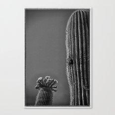 Saguaro in Bloom V1 Canvas Print