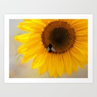The Bee And The Sunflowe… Art Print