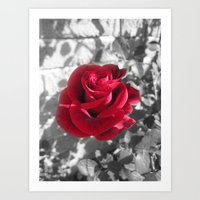 Lovers Rose Art Print