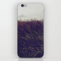 Autumn Field V iPhone & iPod Skin
