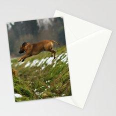 Super Dog Stationery Cards