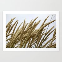 Wheat Art Print