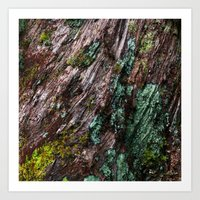 Nature's Patina Art Print