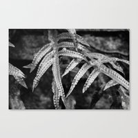 Silvery Foliage Canvas Print