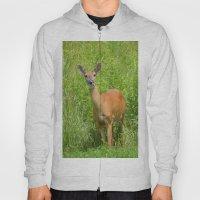 Deer On Edge Of Field Hoody