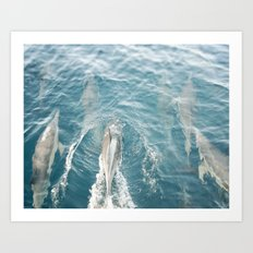 Dolphins Come Play  Art Print