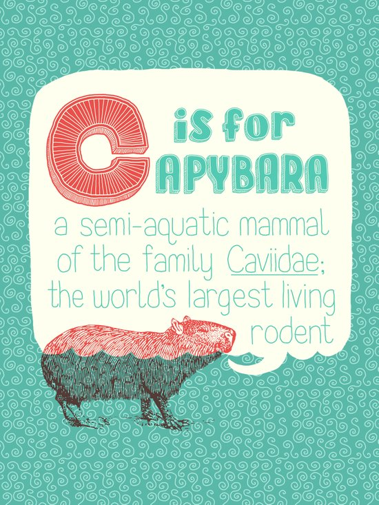 C is for Capybara Canvas Print