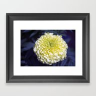 Longwood Gardens - Sprin… Framed Art Print
