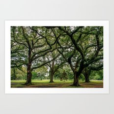 Louisiana Art Print