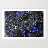 Blue Flox Art Print