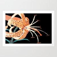 Tiger Lily... Art Print