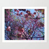 Blossom (2) Art Print