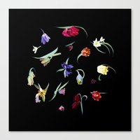 Emerge - Fritilleries Canvas Print