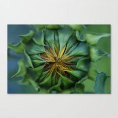 SUNFLOWER 001 Canvas Print