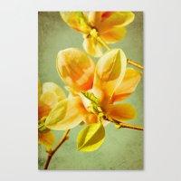 sunny magnolias Canvas Print