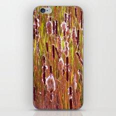 cattails iPhone & iPod Skin