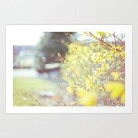Yellow Forsythia Art Print
