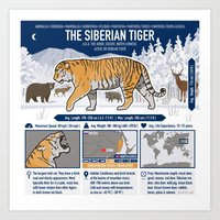 The Wild Ones: Siberian Tiger (info) Art Print