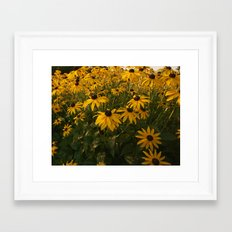Drake Park Flowers...Dawn Framed Art Print