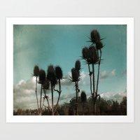 Prickly Teasels  Art Print