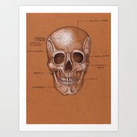 Jesse Young's Human Anatomy Drawing of the SKULL (Circa 2005) Art Print