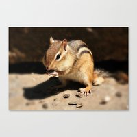 Full Cheeks  Canvas Print