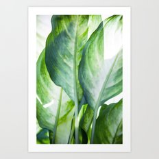 Tropic Abstract  Art Print