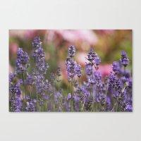 Lavender Flowers Canvas Print