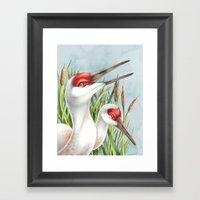 Sandhill Cranes Framed Art Print